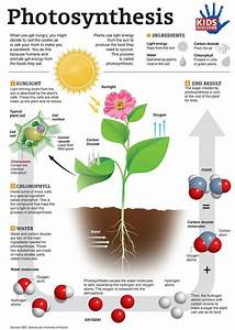 17 Best Images About Photosynthesis Lessons For Middle And