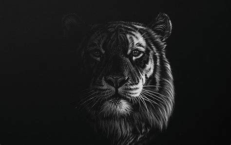 stunning realistic wildlife white  black drawings
