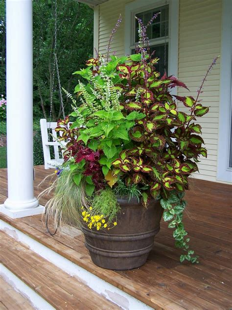coleus container design cottage garden designs we love hgtv