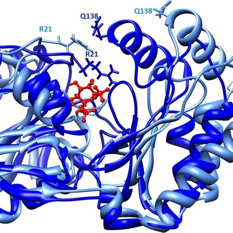 Ligand binding interactions. Shown is the active site ...