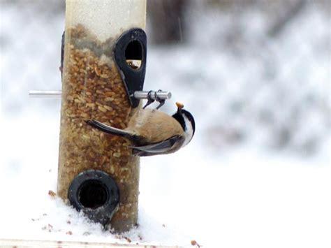 wild bird store your local backyard birding experts