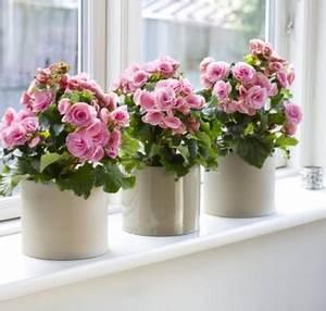 Wie Oft Blumen Gießen : fensterbank dekoration 57 ideen wie sie das potenzial der fensterbank entdecken ~ Orissabook.com Haus und Dekorationen