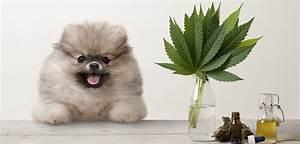 Atemübung Zur Beruhigung : cbd l f r hunde richtig dosieren zur beruhigung bei epilepsie schmerzen allergie und arthrose ~ A.2002-acura-tl-radio.info Haus und Dekorationen