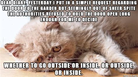 sad cat diary pic i am bored