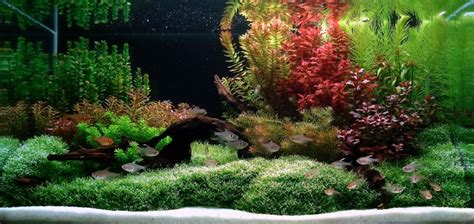 Freshwater Aquascaping Designs - aquascaping ideas aquascapes giving fish a taste of