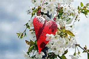 Blumen Der Liebe : kostenlose bild sommer ast garten natur flora baum herzen rote liebe blatt blume ~ Orissabook.com Haus und Dekorationen
