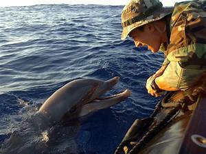 Crimea's dolphin army: Navy SEALS are one thing, but an ...