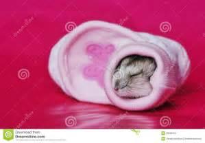 Cute Baby Hamsters