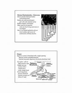 Flatworms Worksheet Answer Key