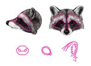 Raccoon Drawing