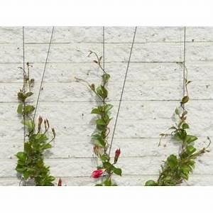 Treillage Plante Grimpante : plante grimpante sur cable ~ Dode.kayakingforconservation.com Idées de Décoration