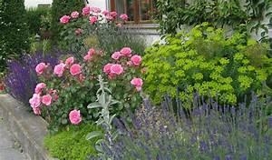 Begleitpflanzen Für Rosen : blumen f r schmales beet page 3 mein sch ner garten forum ~ Orissabook.com Haus und Dekorationen