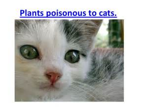plants poisonous to cats plants poisonous to cats