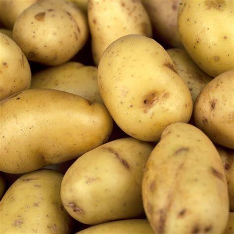 how to season potatoes the new potato season is here mister c s