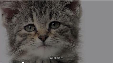 sad meme cat diary image memes at relatably com