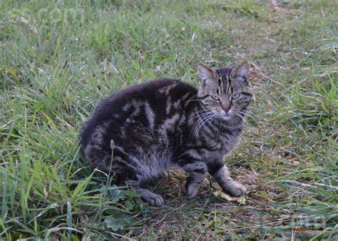 PP.lv Dzīvnieki Kaķi, kaķēni: Meklē mājas Vien pusotru ...