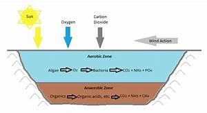 Microalgae Utilization In Wastewater Treatment