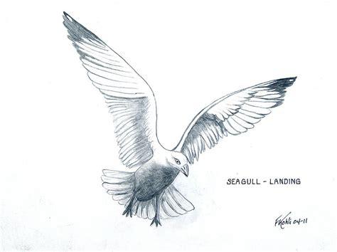 seagull landing drawing  frederic kohli