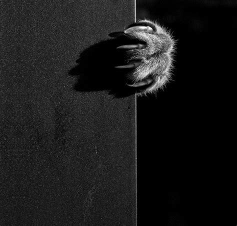 la photo artistique noir  blanc choisir la meilleure