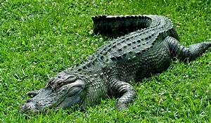 Reptiles - Lizards and snakes, crocodiles and alligators ...