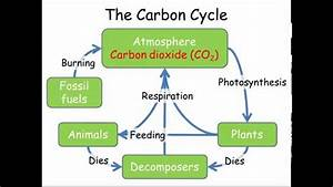 Carbon  U0026 Nitrogen Cycles  Gcse Combined Science Biology