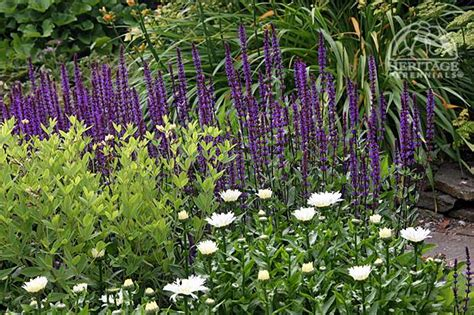 Top 10 Perennials Of The 21st Century  Perennial Gardening