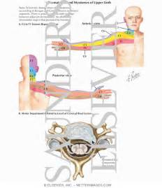 Cervical Nerve Root Radiculopathy Symptoms