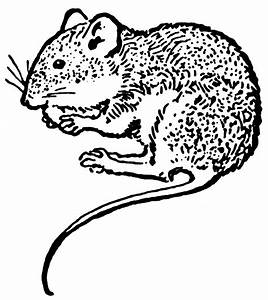 Mouse | ClipArt ETC