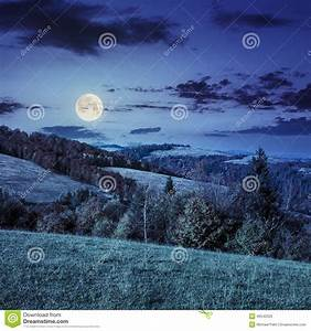 Pine Forest On A Mountain Slope At Night Stock Photo ...