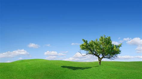 home design for mac beautiful tree on a green meadow hd wallpaper