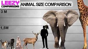 Animal Size Comparison