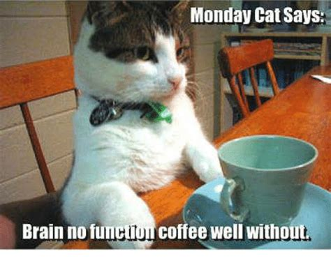 Without further ado, here are the best memes to complete your mondays. 25+ Best Memes About Monday Cat | Monday Cat Memes