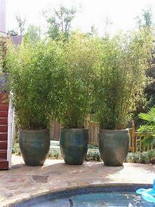22 fascinating and low budget ideas for your yard and for Patio privacy screen plants