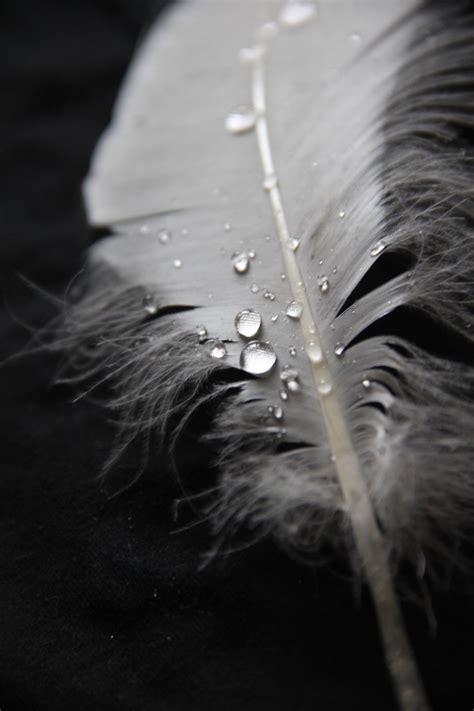 magical   feathers  water drops