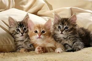 Katzen Fernhalten Von Möbeln : katzen stammbaum geliebte katze magazin ~ Sanjose-hotels-ca.com Haus und Dekorationen