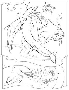 dolphin coloring dolphin images  printable dolphin
