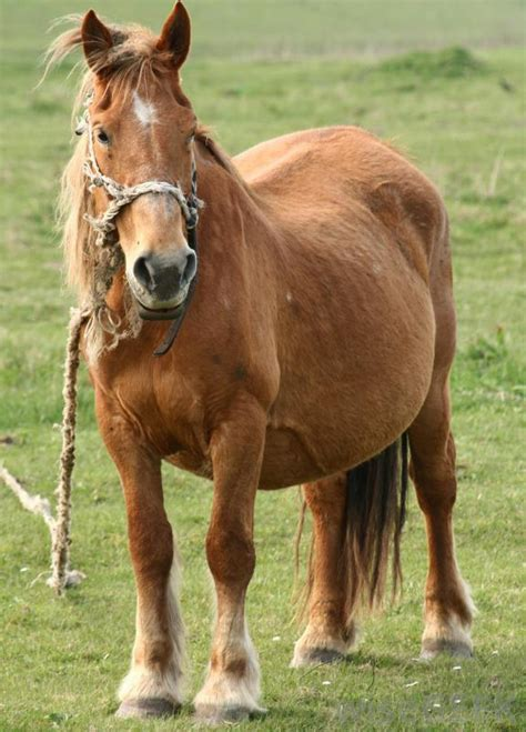 warts  horses  pictures