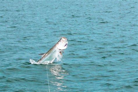 Party Boat Deep Sea Fishing Panama City Beach Fl by Panama City Beach Fishing Charters Dolphin Shell Island
