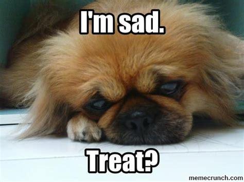 Cute Dog Memes - cute puppy