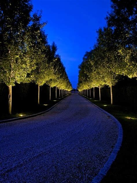 trees uplighter  long driveway  traditional landscape