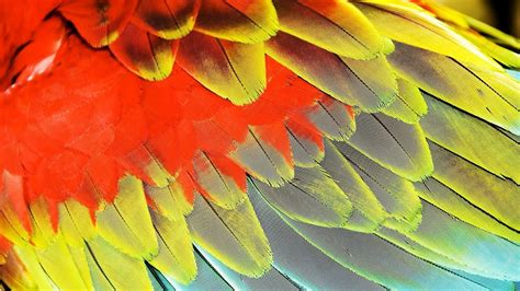 What Are Blood Feathers?