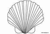 Shell Coloring Seashell Clam Pages Template Scallop Drawing Printable Pearl Sketch Oyster Getcolorings Getdrawings Templates Pa Preschool Colorings Coloringpage Eu sketch template