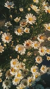 flowers aesthetic summer goldenhour photography