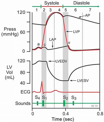Cardiac Cycle Heart Isovolumetric Physiology Contraction Phase
