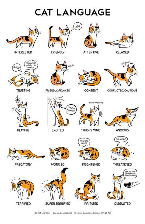 cat behavior why do cats meow top reasons your cats meow kitty cats language and body language