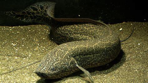 pez  patas increible pero cierto enterate de todo