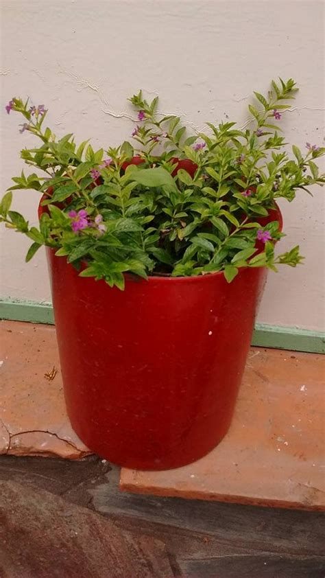 upcycled pots ideas upcycle art