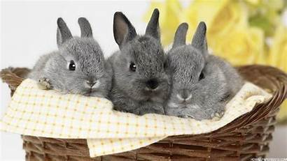 Rabbit Desktop Wallpapers Computer Background Backgrounds Definition