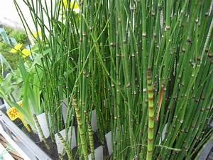 Vente Plante Aquatique L39atelier Des Fleurs