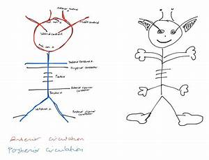 Interesting Way To Remember The Circle Of Willis S